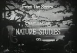 Still frame from: Ants: Nature's Craftsmen