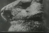 Still frame from: Furry Creatures: A Film Lesson in 'Nature Study'