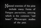 Still frame from: Enemies of the Southern Pine