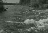 Still frame from: Trout to Dream About