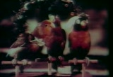 Still frame from: Bill and Coo (1948)