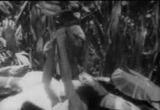 Still frame from: Bird of Paradise