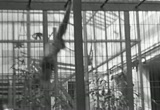 Still frame from: Brookfield Zoo