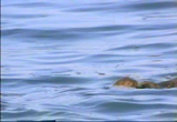 Still frame from: First Breath Cradle In The Sea
