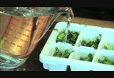 Still frame from: Food Mob Bites 13: Store Herbs in Ice