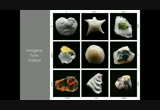 Still frame from: Gary Greenberg: The beautiful nano details of our world