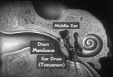 Still frame from: How the Ear Functions
