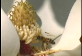 Still frame from: Stock Footage - Bees in the Trees