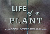Still frame from: Life Of A Plant