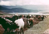 Still frame from: Master Farmers of the Andes 1948