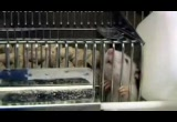 Still frame from: Monkeys, Rats and Me: Animal Testing