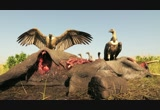 Still frame from: Munir Virani: Why I love vultures