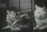 Still frame from: Private Life of a Cat