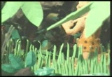 Still frame from: Egg