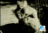 Still frame from: Teddy Bears at Play