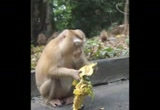 Still frame from: The Letters Of Gratitude visit Phuket's Monkey Hill (Jack Johnson's Curious George Soundtrack)