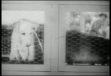 Still frame from: The Kennel Murder Case