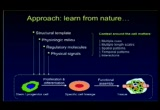 Still frame from: Tissue Engineering: Challenges of Imitating Nature