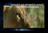 Still frame from: Top 10 Des Animaux Armes Meurtrières By Puma83 For Tunisia Sat.com
