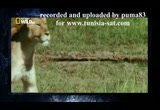 Still frame from: Top 10 Des Animaux Armes Meurtrières By Puma83 For Www.tunisia Sat.com