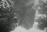 Still frame from: Under the Sea, 1929 (Reel 2)