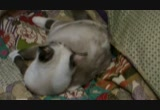 Still frame from: Young Cats Play-Fighting and Cleaning