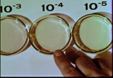 Still frame from: Acid-Base Indicators