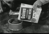 Still frame from: General Foods: Gaines Meal Dog Food, 1960s (dmbb14801)