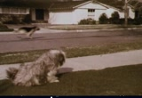 Still frame from: General Foods: Gravy Train Dog Food, 1970s (dmbb34808)
