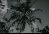 Still frame from: Florida Citrus: Florida Grapefruit, 1950s-1960s (dmbb43623)