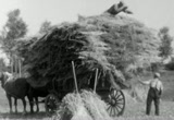 Still frame from: 8mm homemovie about the production of wheat in Holland