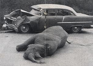 rhinomustdie.jpg
