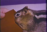 Still frame from: Squeak the Squirrel