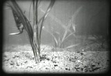 Still frame from: Water Insects