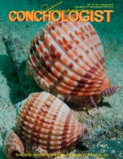 American Conchologist Quarterly Bulletin Of The