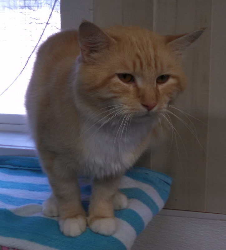 Beverly Animal Shelter Pets of the Week: Pets in real need of