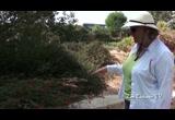Earth friendly garden manhattan beach botanical garden - Manhattan beach botanical garden ...