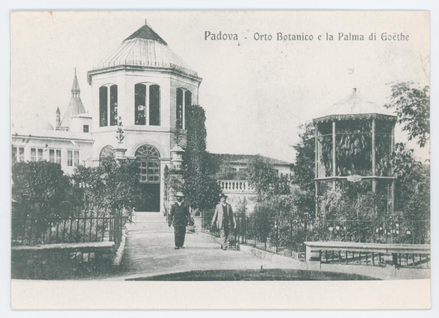 Padova - Orto Botanico e la Palma di Goethe : non ...