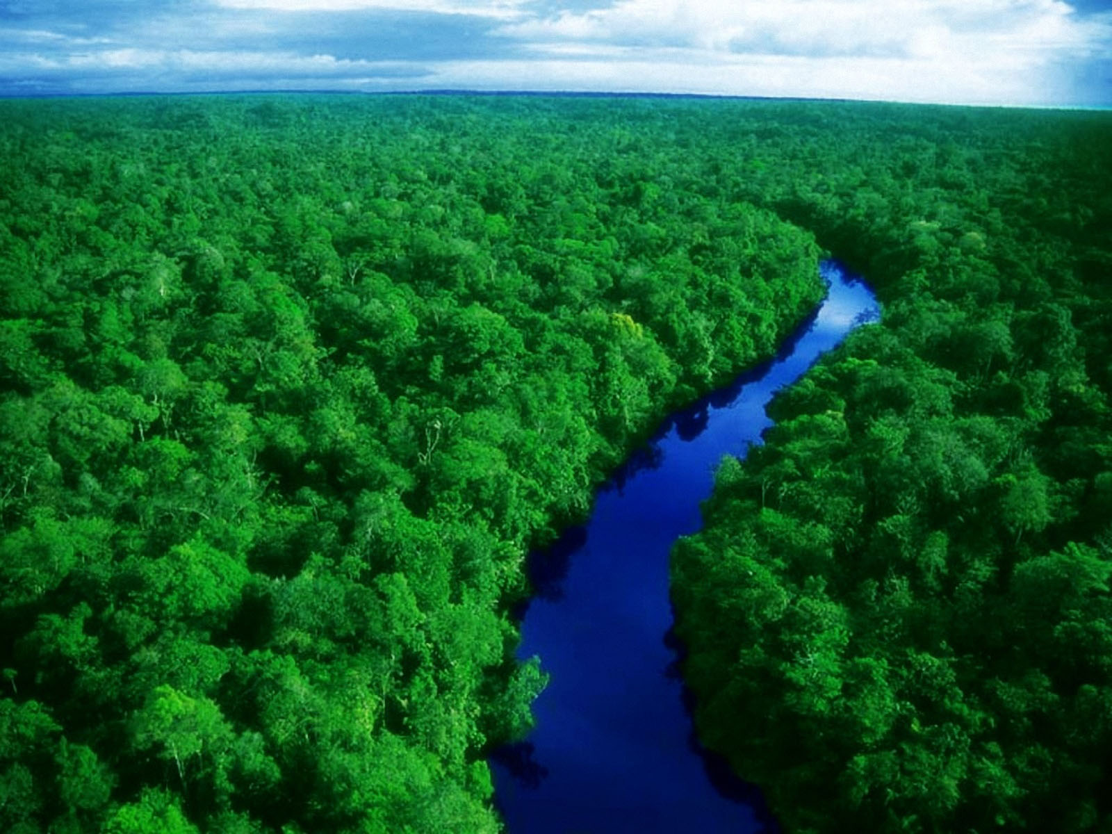 amazon forest hd pictures 2 free download borrow and streaming