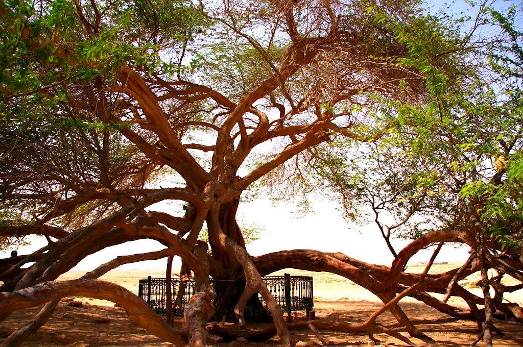 Sharajat-al-Hayat, a árvore da vida
