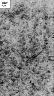 Richard Wagner microform : Leben und Werk : ein religiös- sittliches Problem