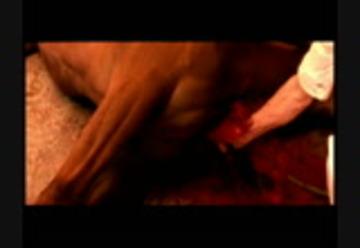 Noe gaspar free online love watch Love (2015)