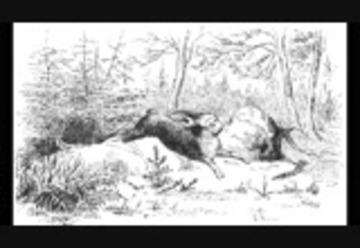 Märchen Von Hans Christian Andersen Der Tannenbaum.Der Tannenbaum Hör Märchen Hans Christian Andersen