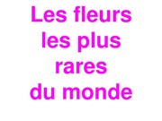 Fleurs Uniques Au Monde Free Download Borrow And Streaming