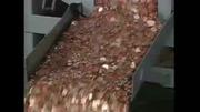US Mint Footage 1995