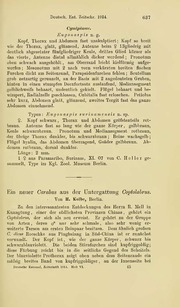 Vol 1914: Ein neuer Carabus aus der Untergattung Coptolabrus