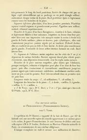 Vol 1910: Une nouvelle espece de Promachocrinus