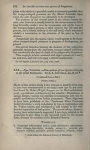 Vol 2: XXX.—Algæ orientales:—Descriptions of new species belonging to the genus Sargassum