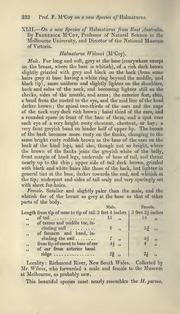 Vol 18: XLII.—On a new species of Halmaturus from East Australia