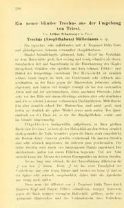 Vol 26: Ein neuer blinder Trechus aus der Umgebung von Triest